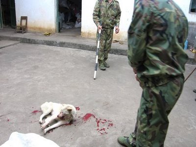 china_dog_slaughter