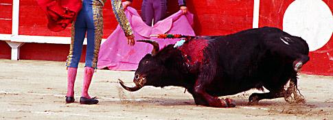 bull_at_bullfight_175_tcm25-1432