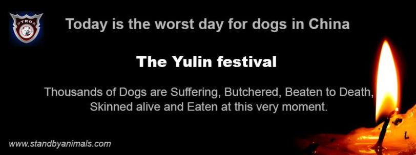 Yulin, China, dog meat