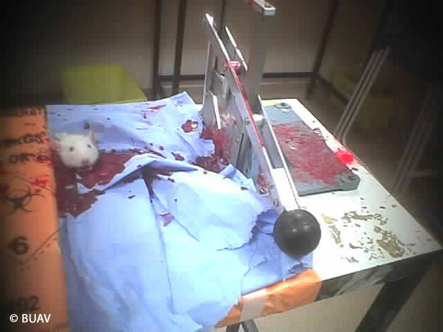 Imperialcollege Imperial College London Torture Animals