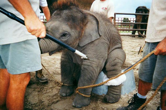 alg-baby-elephant-jpg