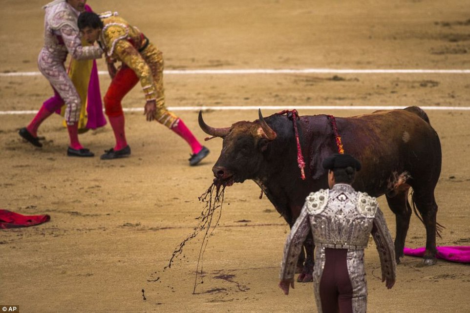 Is It Wrong To Cheer When A Matador Gets Badly Hurt By A Bull ...