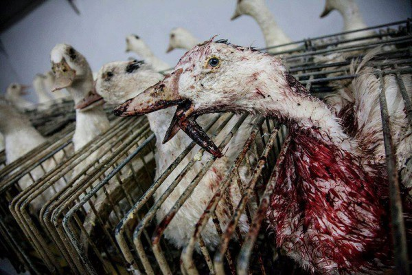 foie_gras-600x400