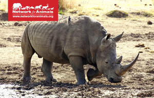petition for rhinos