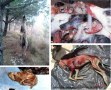 spanish-festivals-and-traditions-hanging-galgos-tortured-to-death-killed-web-copy