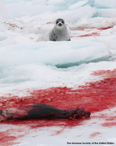 Seal Hunt & Watch 2009